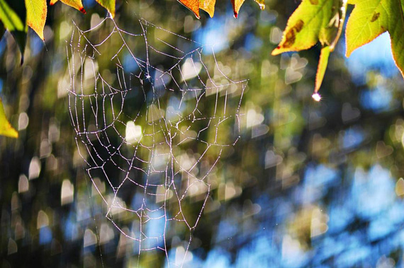 spider web and bokeh