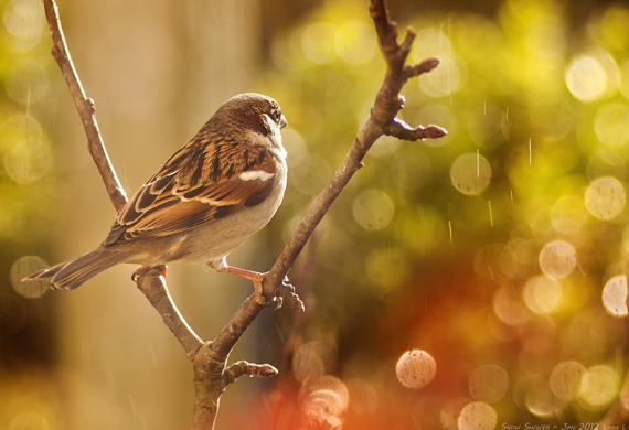 bird photography with bokeh