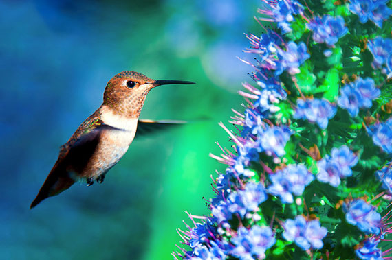 great hummingbird photography tips