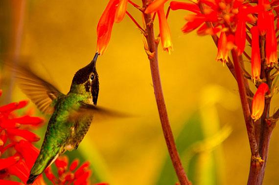 tips for better hummingbird photos
