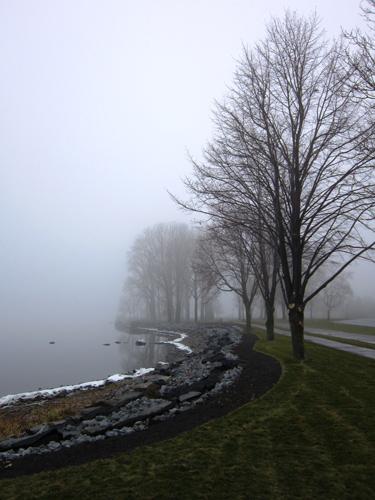 gray foggy landscape