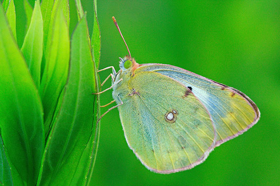 macro photography tips for composition