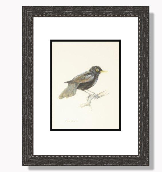 John White Original Painting of a Blackbird