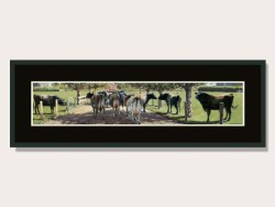 Walking the Gauntlet by Barry Ross Smith Framed Print