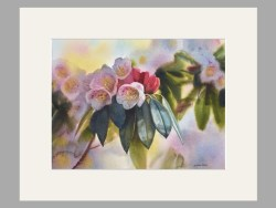Rhododendron Matted Print by Svetiana Orinko