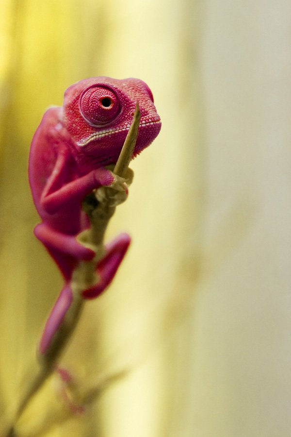 veiled 50 colorful animals photography