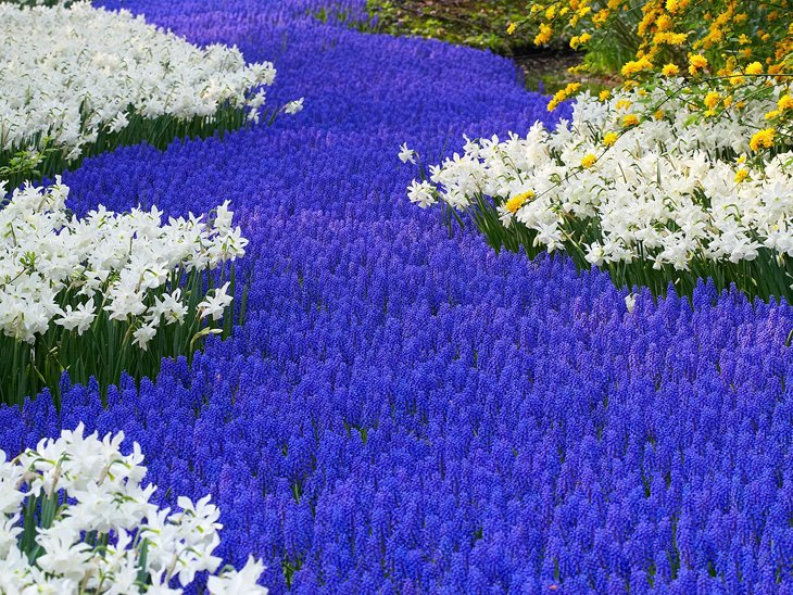 World Largest Flower Garden - Netherlands (12)