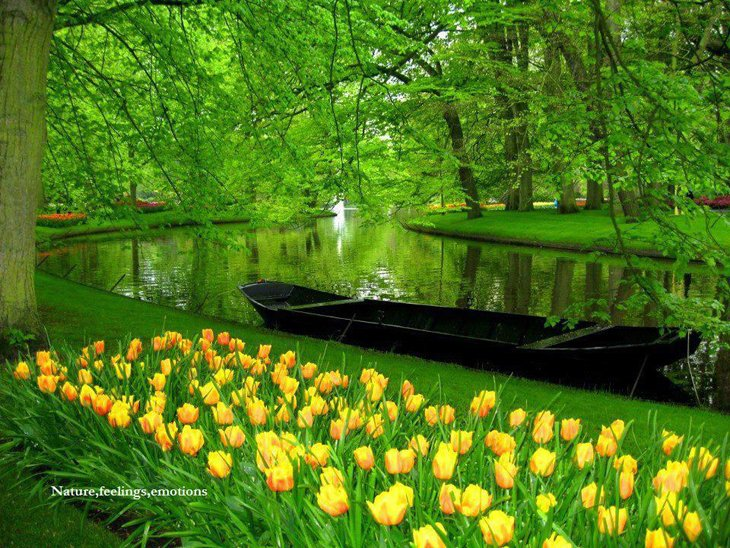 World Largest Flower Garden - Netherlands (4)