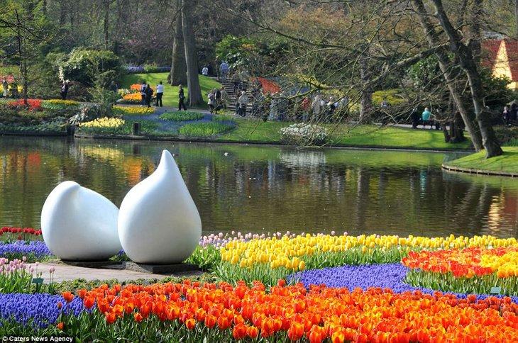 World Largest Flower Garden - Netherlands (14)