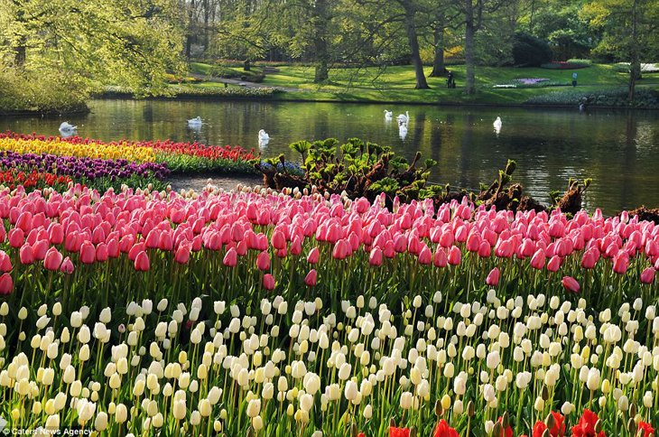 World Largest Flower Garden - Netherlands (13)