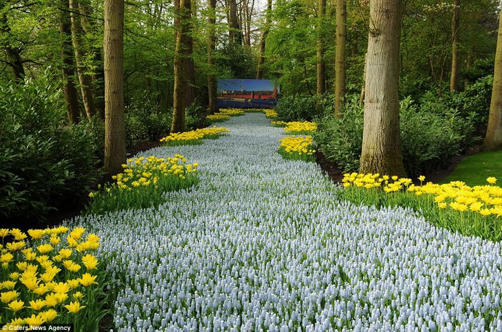 World Largest Flower Garden - Netherlands (16)