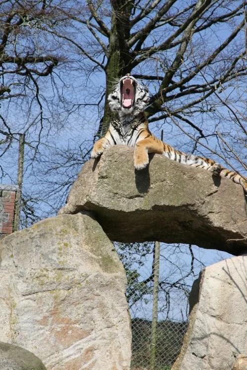 Tour Dartmoor Zoological Park
