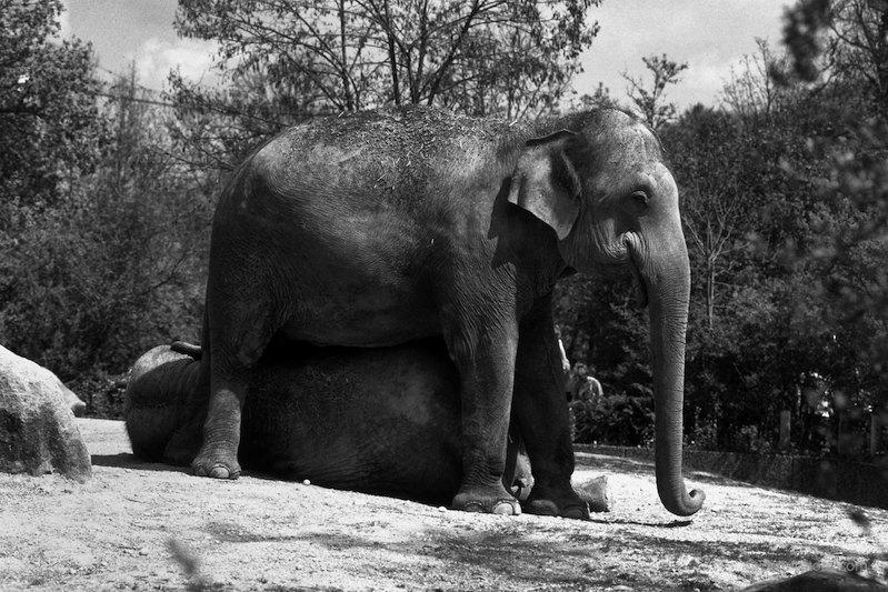 Elefanten im Zoo
