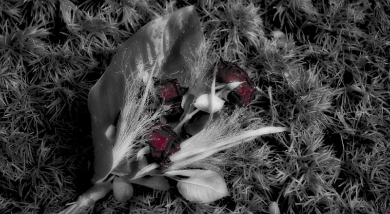 flowers on green gras