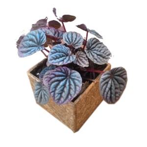 Plant Pot2