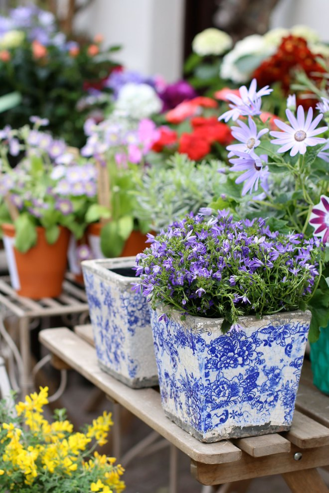 Frühlingsblumen für den Balkon