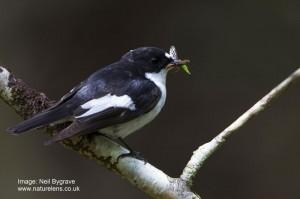 Neil Bygrave - Devon Wildlife Trust