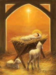 Jesus manger lambs