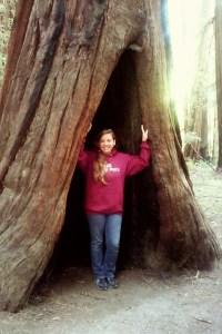 Stood inside a redwood