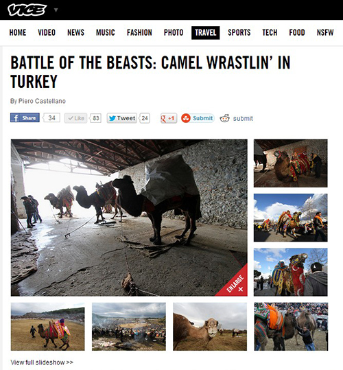 BATTLE OF THE BEASTS: CAMEL WRASTLIN' IN TURKEY