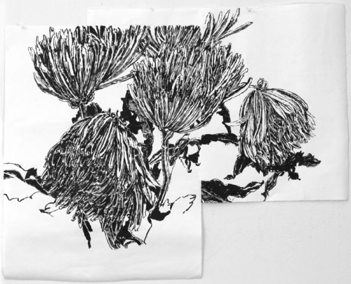 "Dawn Clements - ""Chrysanthemums (black ink),"" 2014, Sumi ink on paper, 26.5 x 33 inches"