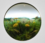 Dandelion Cluster - 2010, Styrene, acrylic, neoprene, hair, paper, polyurethene foam, wood, lighting, BK7 glass. 2-inch exposed lens. Interior box dimensions: approximately 14.25 (wide) x 10.5 (high) x 10 (deep) inches. Private Collection