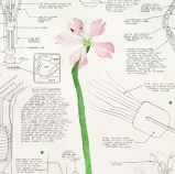"Justin Amrhein - ""Gibraltar Campion,"" 2014, Graphite and watercolor on paper, 24 x 16 inches"