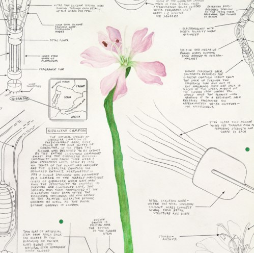 """Justin Amrhein - """"Gibraltar Campion,"""" 2014, Graphite and watercolor on paper, 24 x 16 inches"""