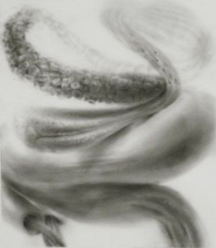 """Teedleblat,"" 2013, powdered graphite on mylar, 4.75 x 4 inches"
