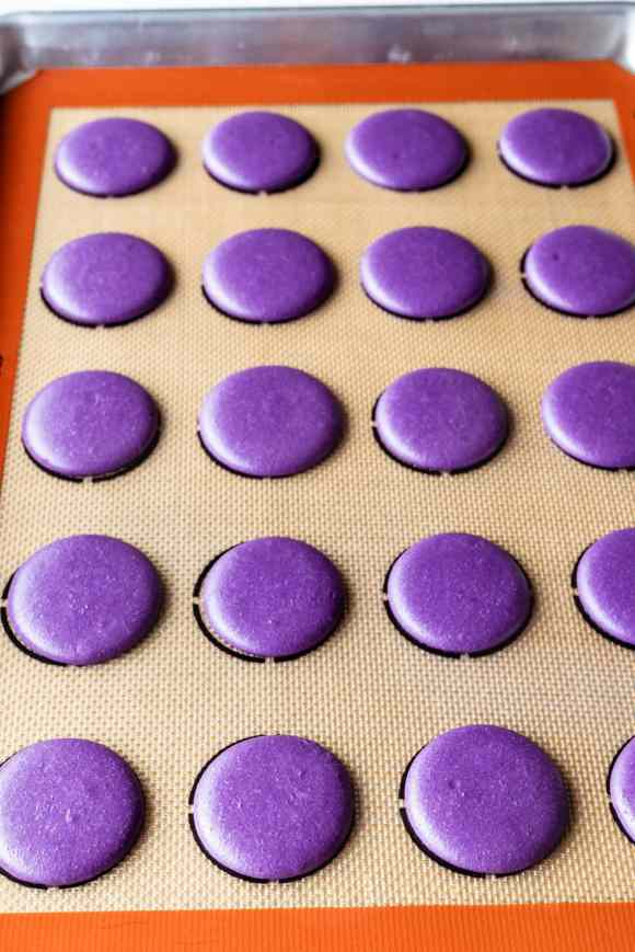 purple macaron shells piped on a tray