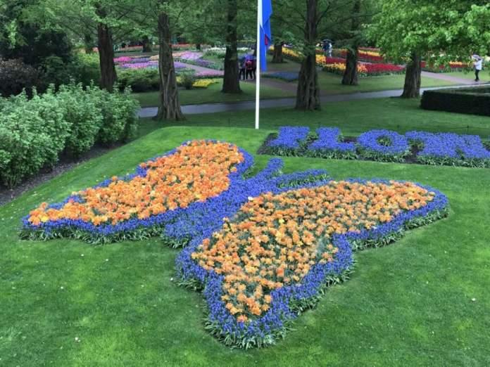 farfalla tulipani