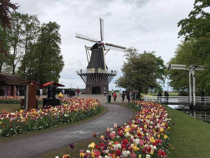 mulino fiori olanda