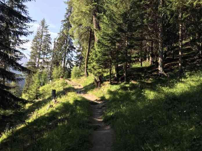 sentiero bosco escursione
