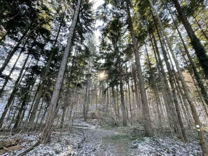 cosa vedere sassello foresta deiva