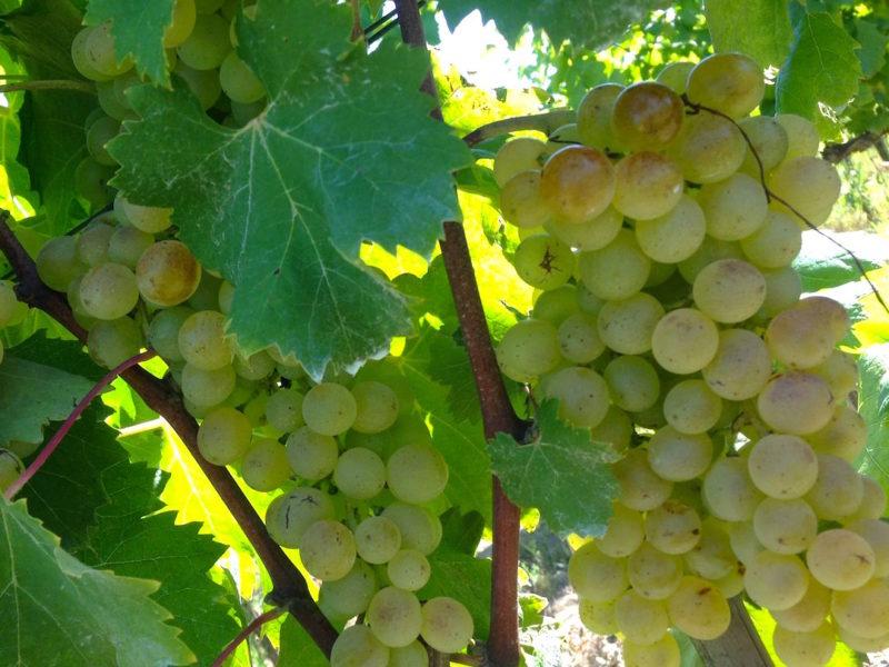 harvest201438
