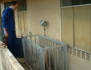 Veterinary Services: Production