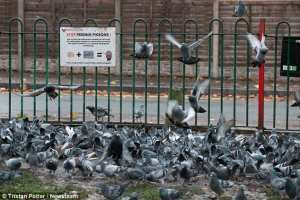 Pigeon Dropping problems