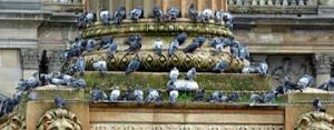 pigeon problem