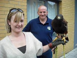A hawk perched on a woman's handlers hand. They are used to deter pigeons from certain areas