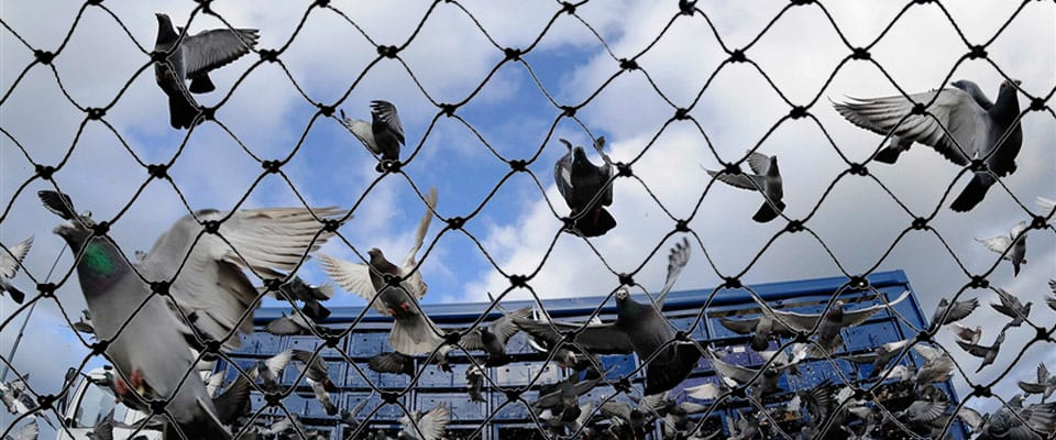Pigeon Patrol Bird Mesh Netting