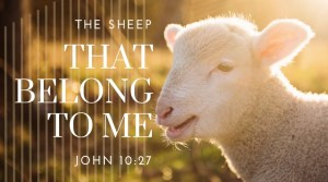 Photo of lamb with message from John 10:27 -- The sheep that belong to me listen to my voice.