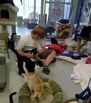 cat-shelter-barrie