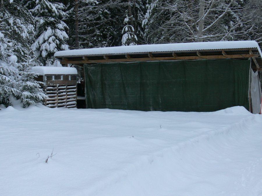 Taimipiha talvella