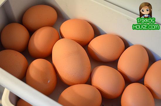 Big-Egg2