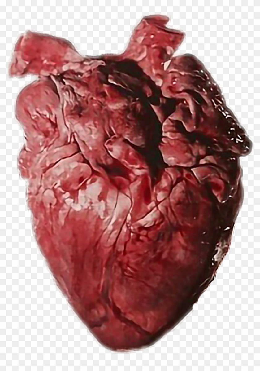 Brook Heart Corazon Real Imagine Human Brokenmyheart Heart Organ Clipart 1757913 Pikpng