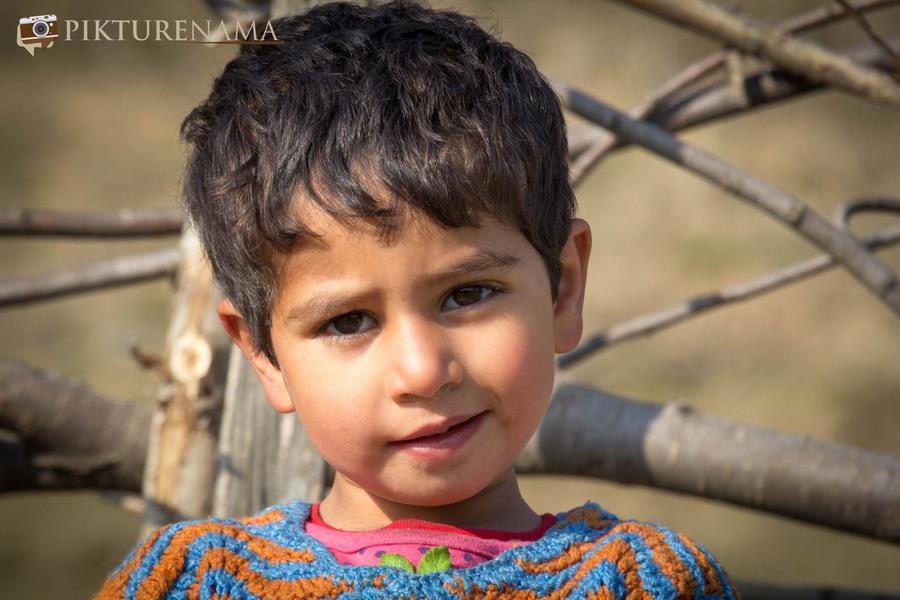Faces of Kashmir apple orchard 8