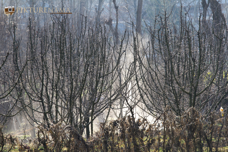 Faces of Kashmir apple orchard 2