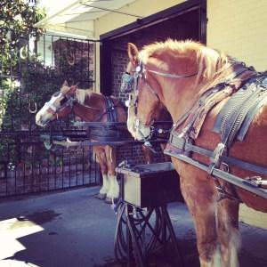Charleston Carriage Tours