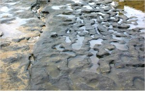 Orme di uomini preistorici nei pressi di Norfolk (foto: effedieffe)
