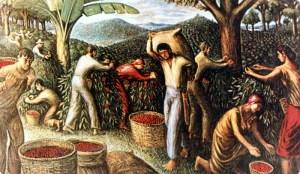 Una piantagione di caffè. Sulle origini del caffè fiorirono numerose leggende popolari